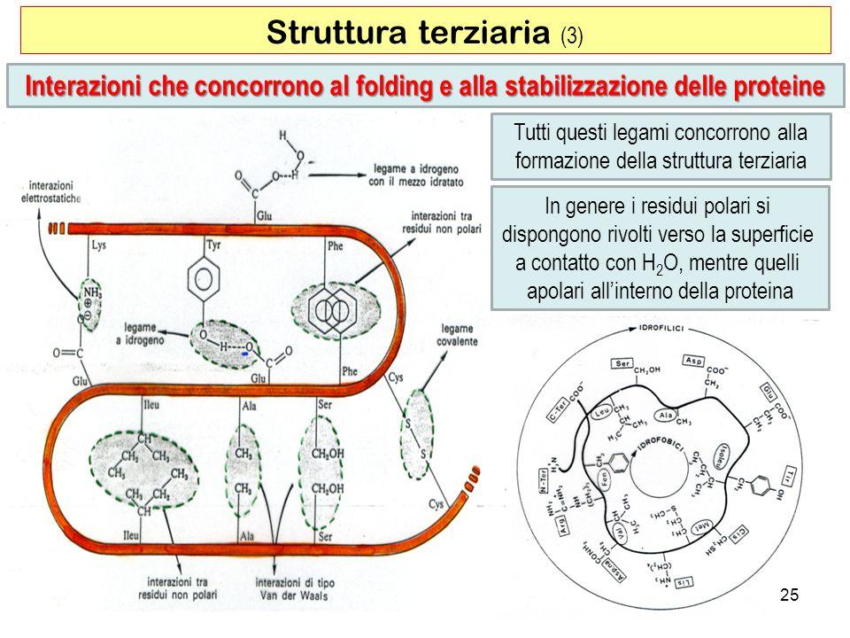 Struttura terziaria (3)