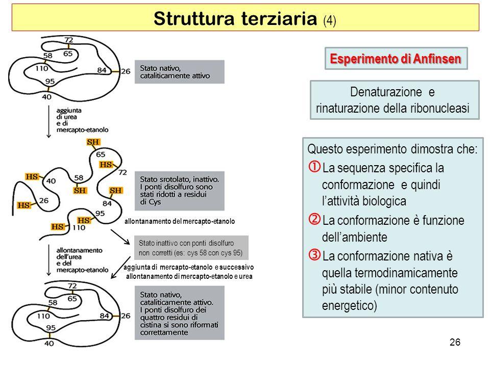 Struttura terziaria (4)
