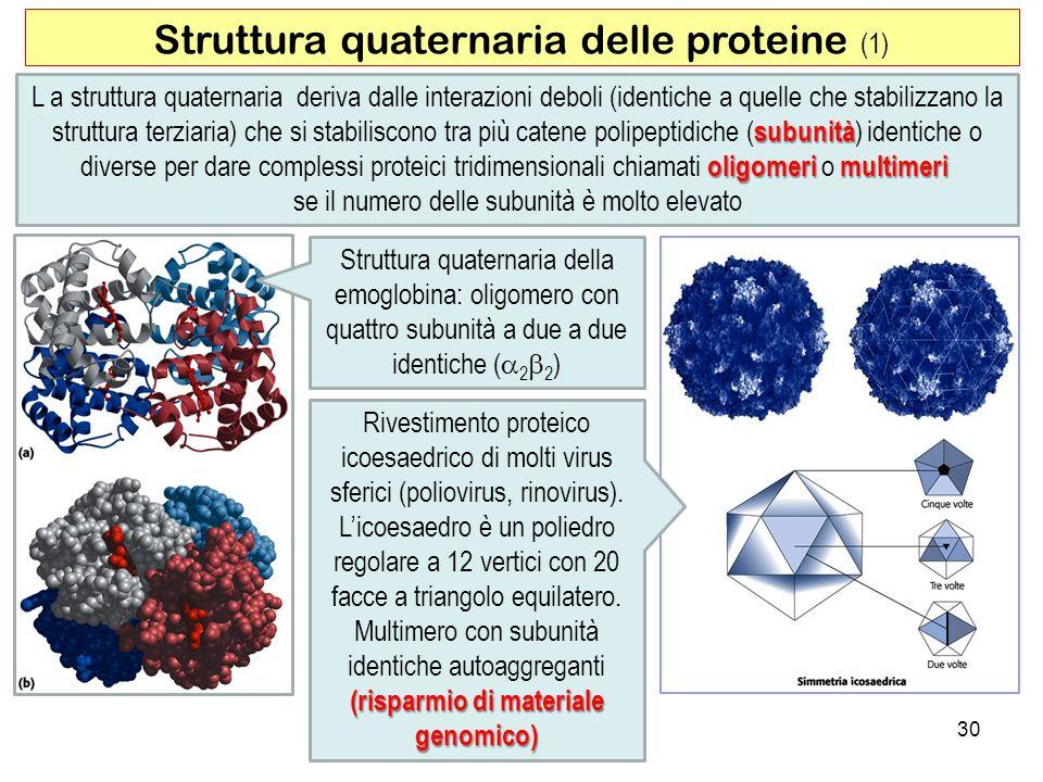 Struttura quaternaria delle proteine (1)