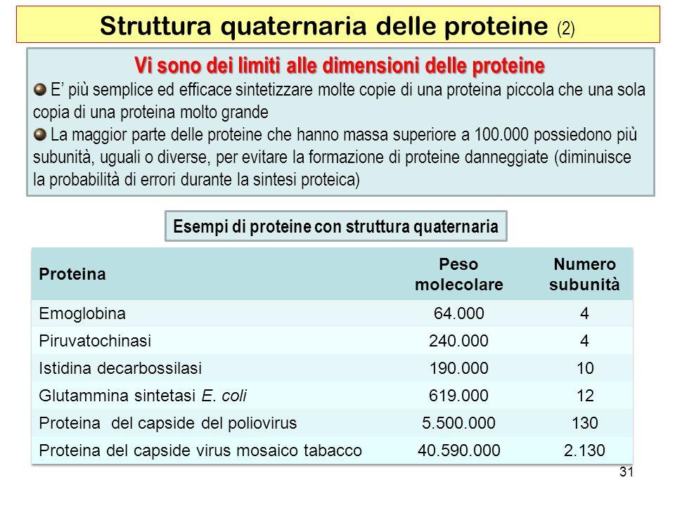 Struttura quaternaria delle proteine (2)