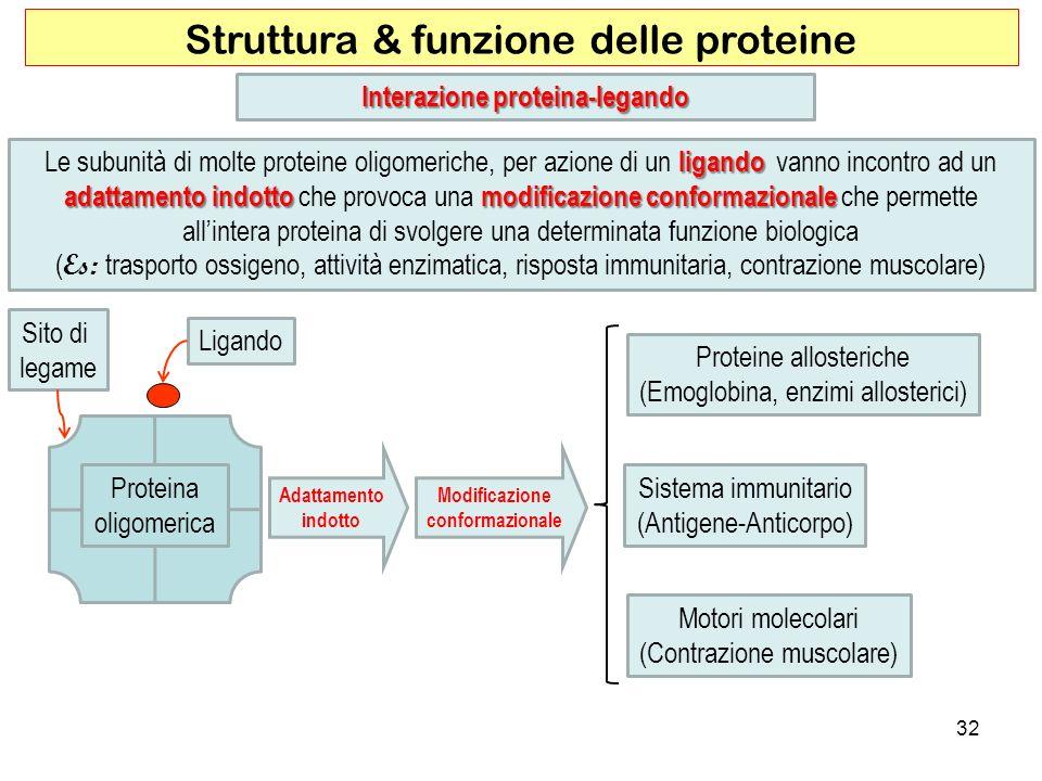Interazione proteina-legando Modificazione conformazionale
