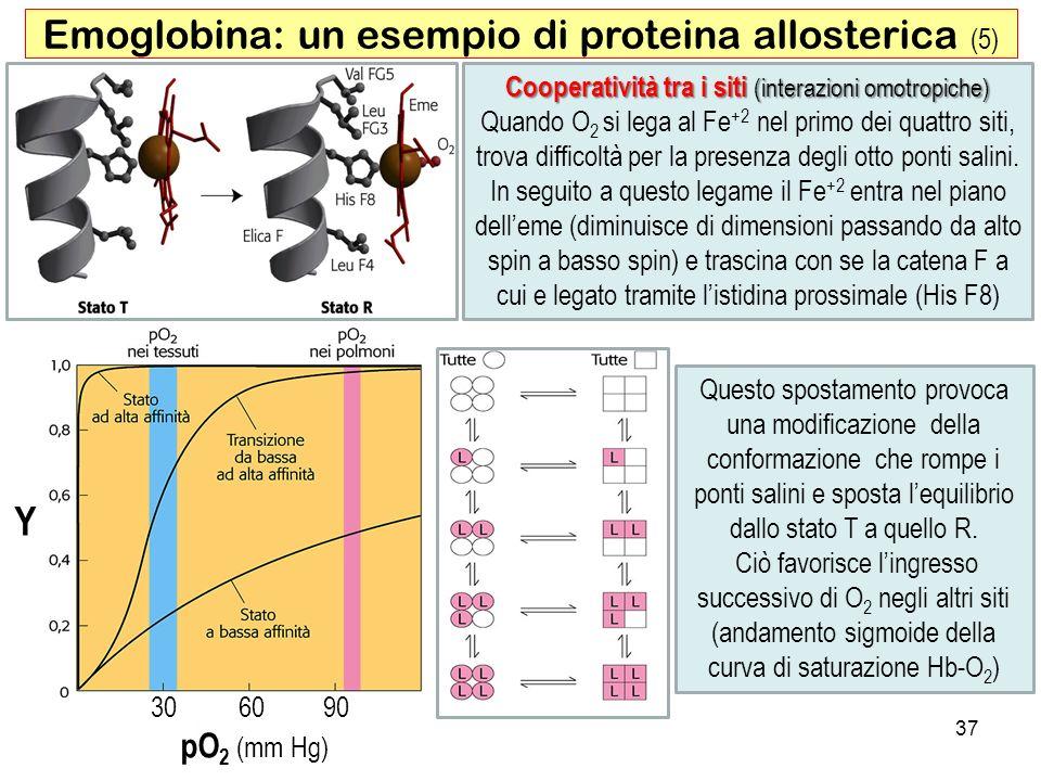 Emoglobina: un esempio di proteina allosterica (5)