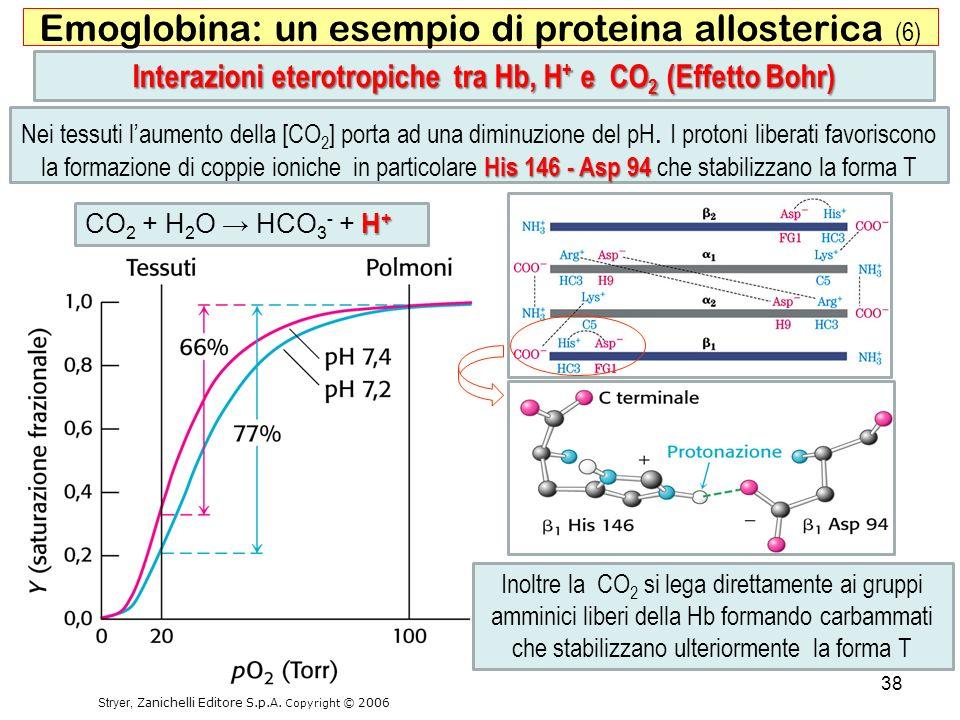 Interazioni eterotropiche tra Hb, H+ e CO2 (Effetto Bohr)