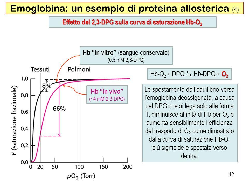 Effetto del 2,3-DPG sulla curva di saturazione Hb-O2