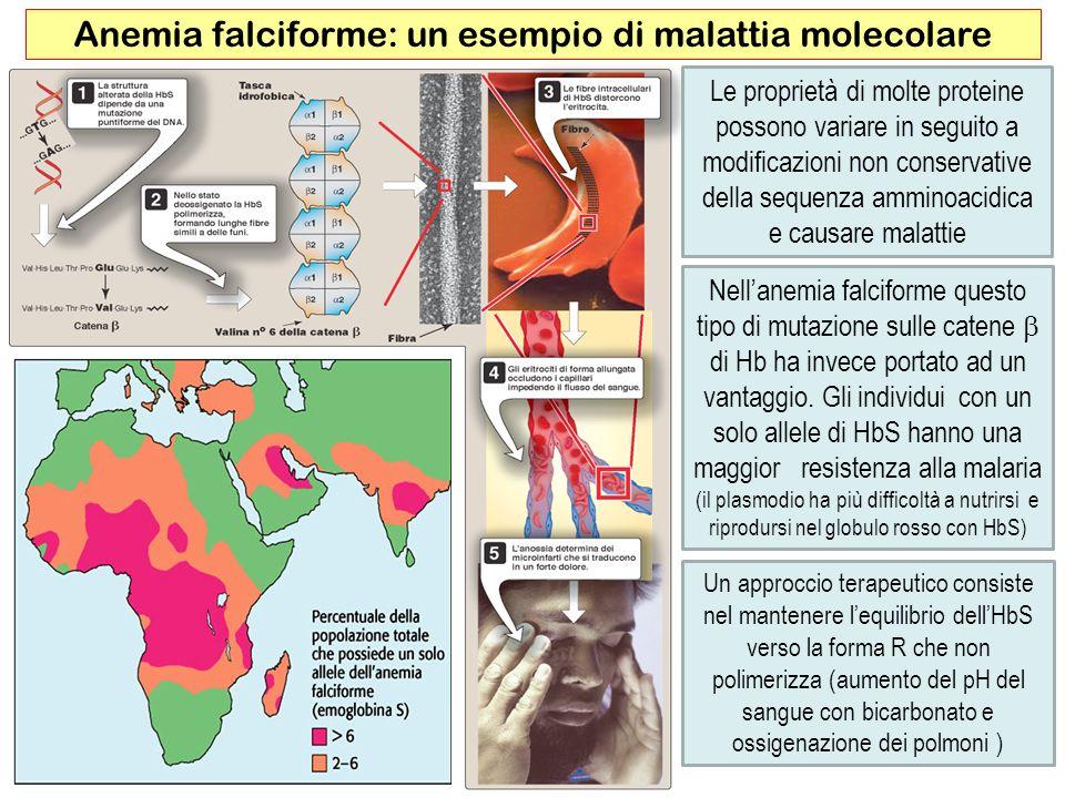 Anemia falciforme: un esempio di malattia molecolare
