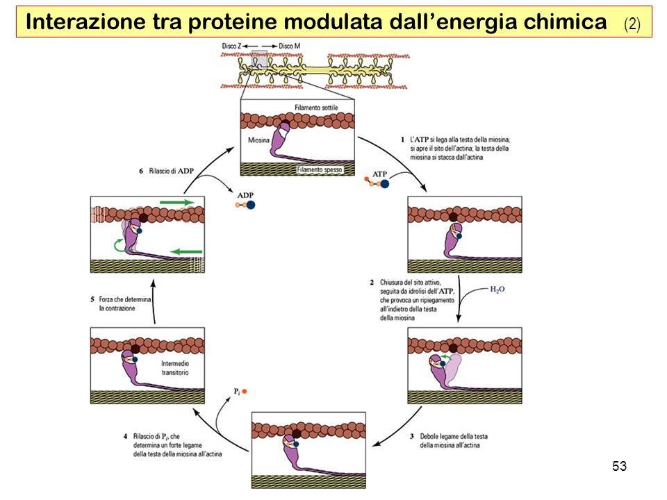 Interazione tra proteine modulata dall'energia chimica (2)