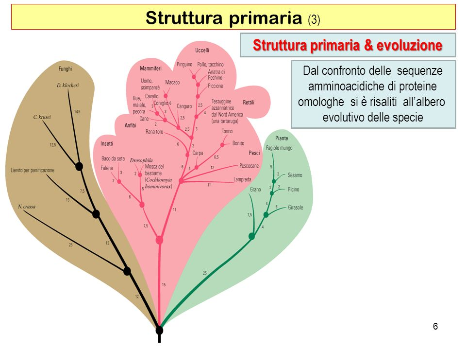 Struttura primaria & evoluzione