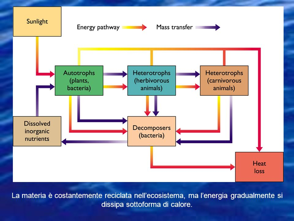 La materia è costantemente reciclata nell'ecosistema, ma l'energia gradualmente si dissipa sottoforma di calore.