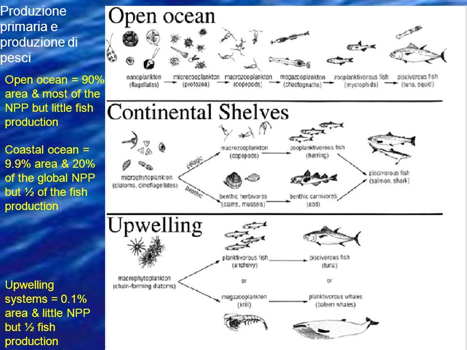 Produzione primaria e produzione di pesci