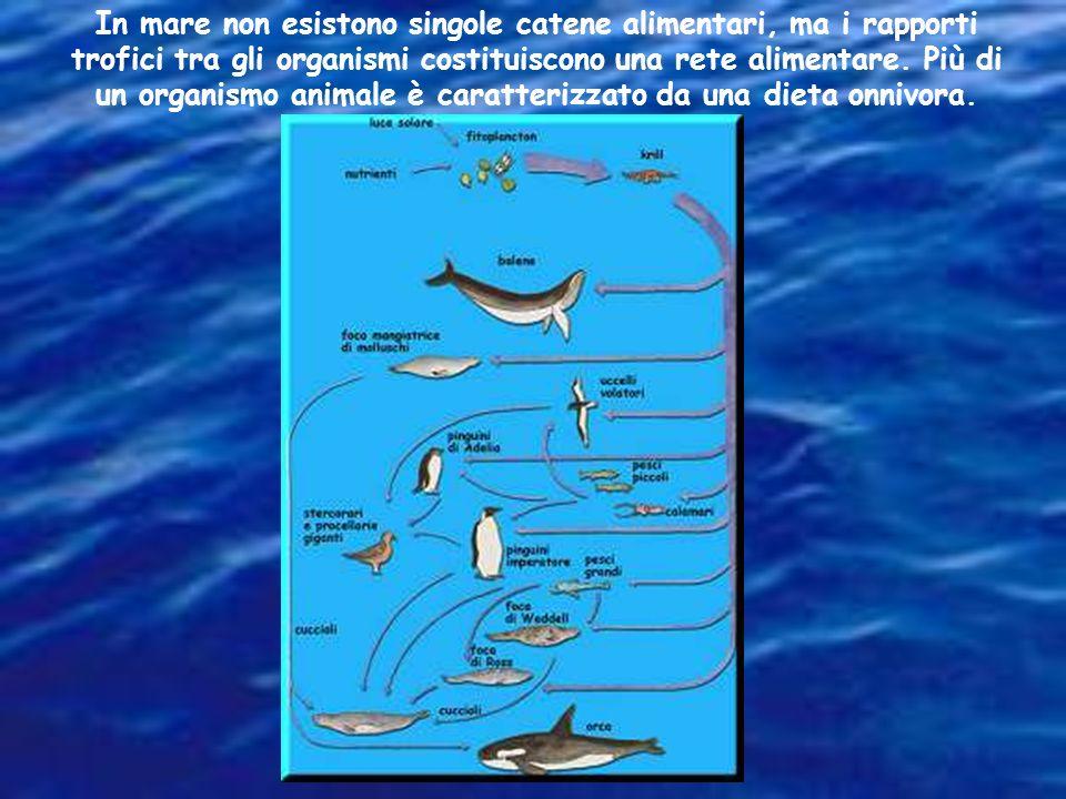 In mare non esistono singole catene alimentari, ma i rapporti trofici tra gli organismi costituiscono una rete alimentare.