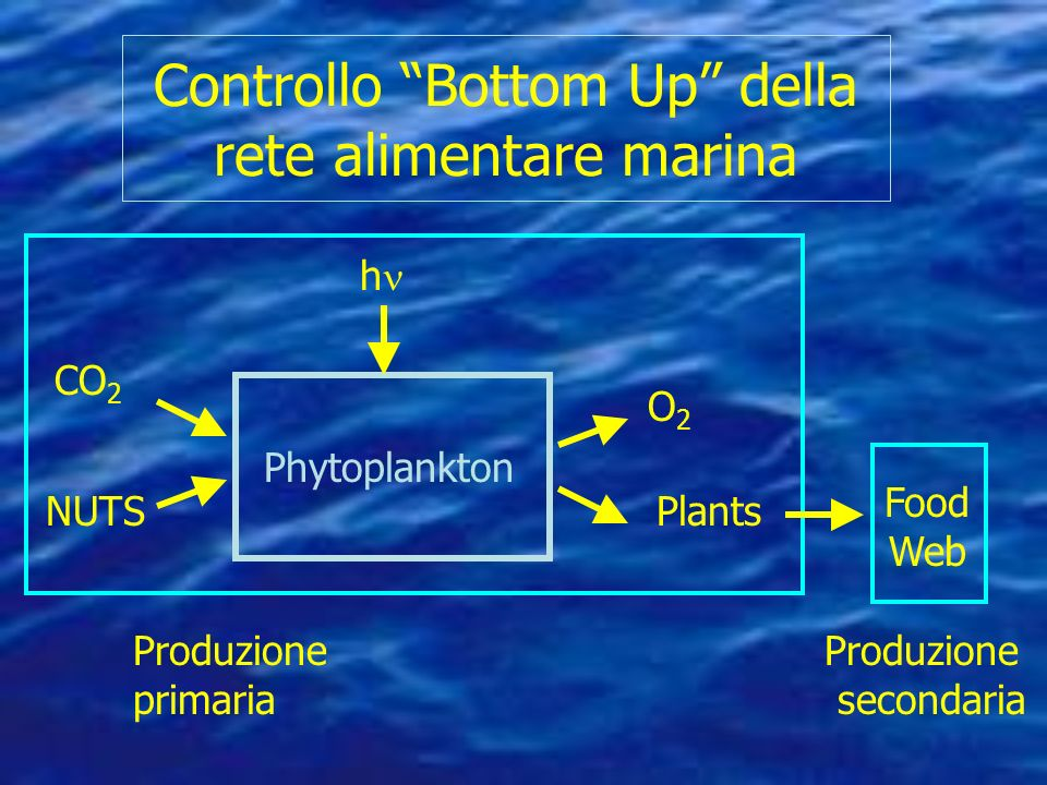 Controllo Bottom Up della rete alimentare marina