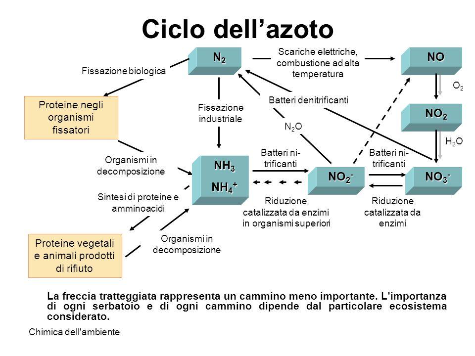Ciclo dell'azoto N2 NO NO2 NH3 NH4+ NO2- NO3-
