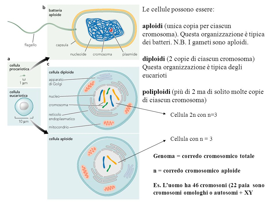Le cellule possono essere: