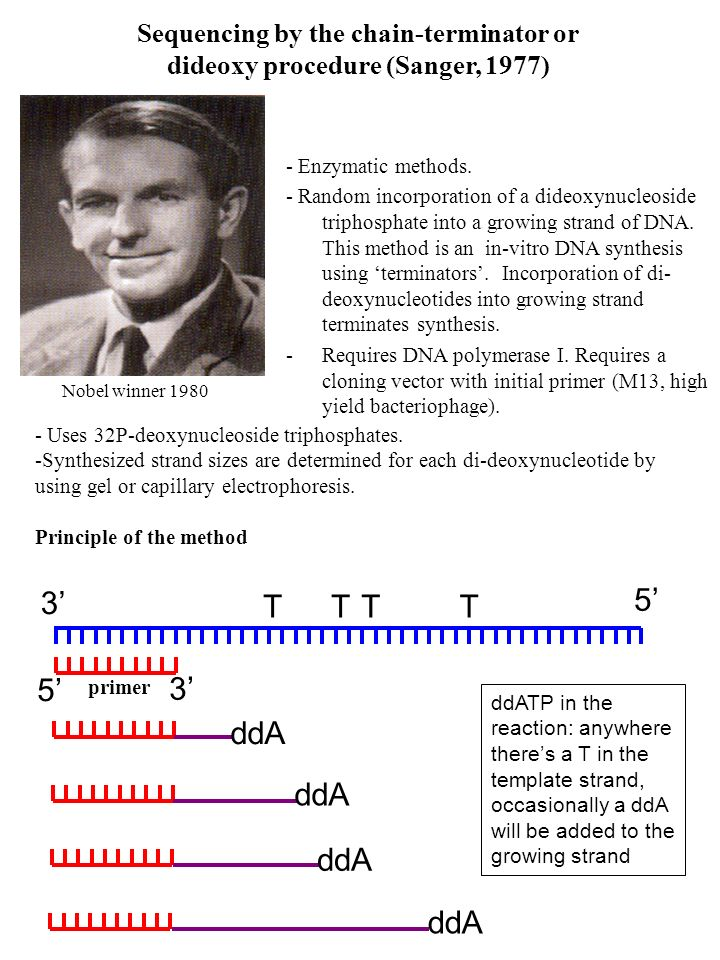 Sequencing by the chain-terminator or dideoxy procedure (Sanger, 1977)