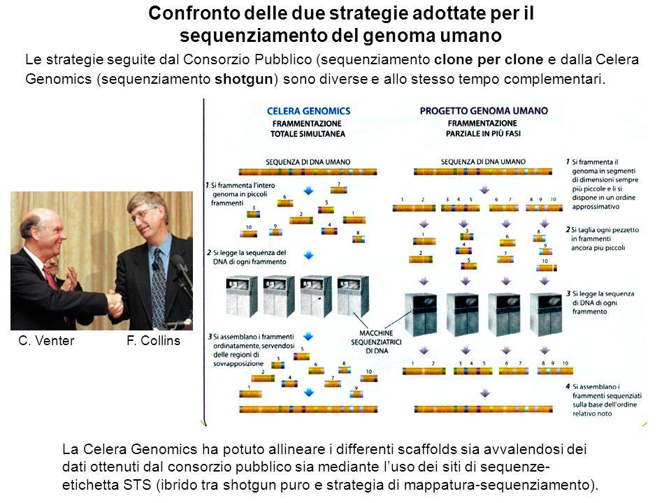 Confronto delle due strategie adottate per il sequenziamento del genoma umano