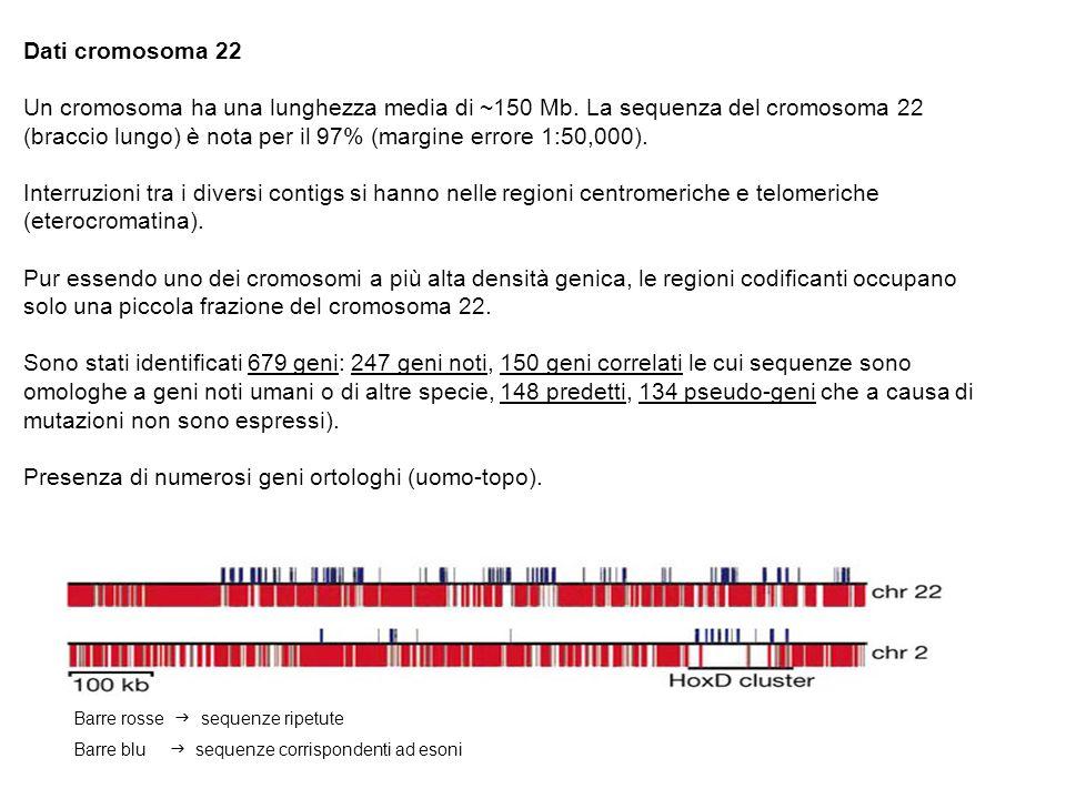 Presenza di numerosi geni ortologhi (uomo-topo).