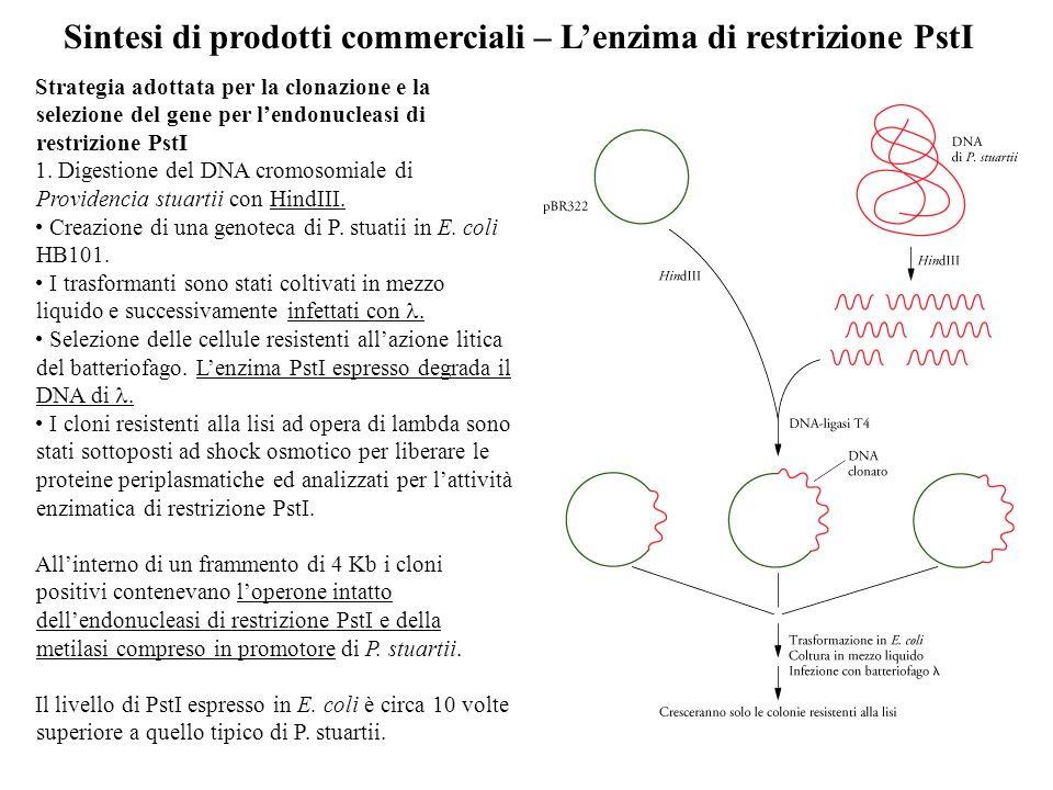 Sintesi di prodotti commerciali – L'enzima di restrizione PstI