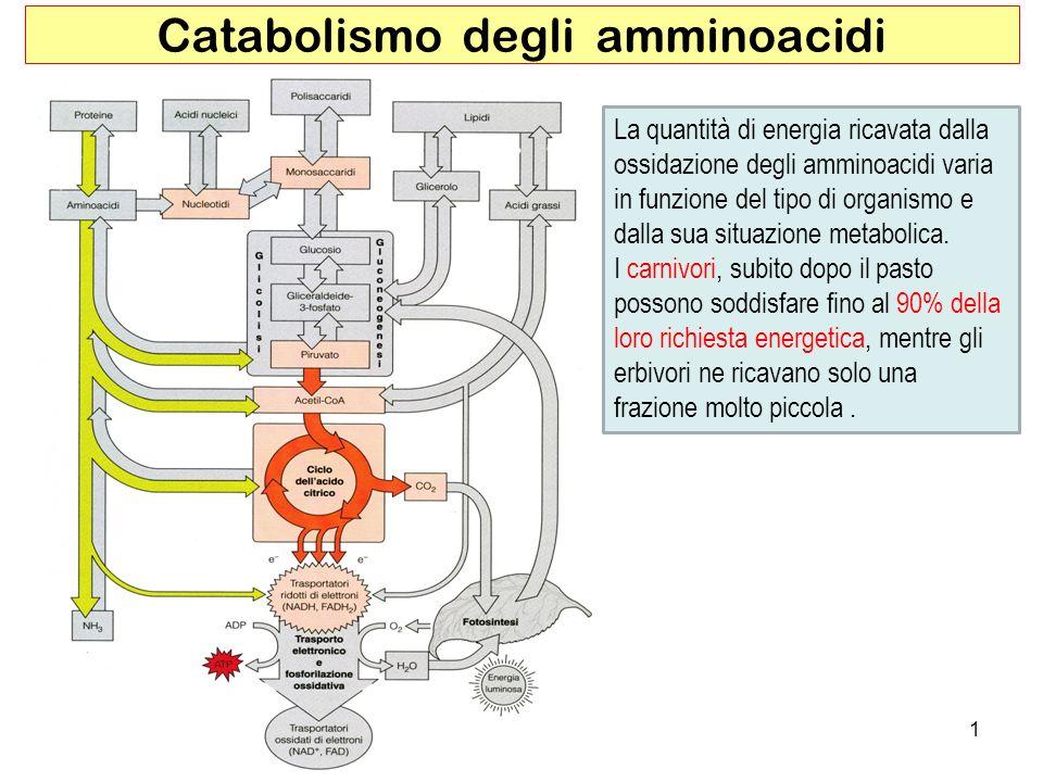 Catabolismo degli amminoacidi