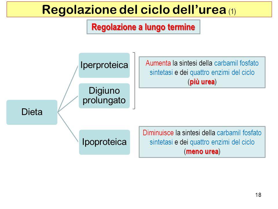 Regolazione del ciclo dell'urea (1)