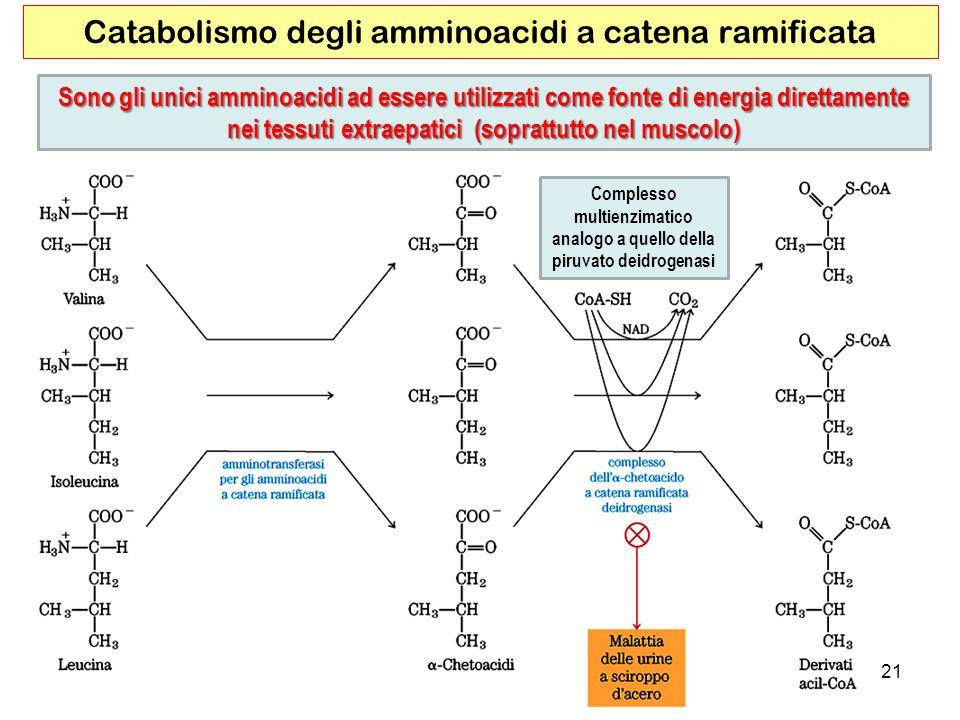 Catabolismo degli amminoacidi a catena ramificata