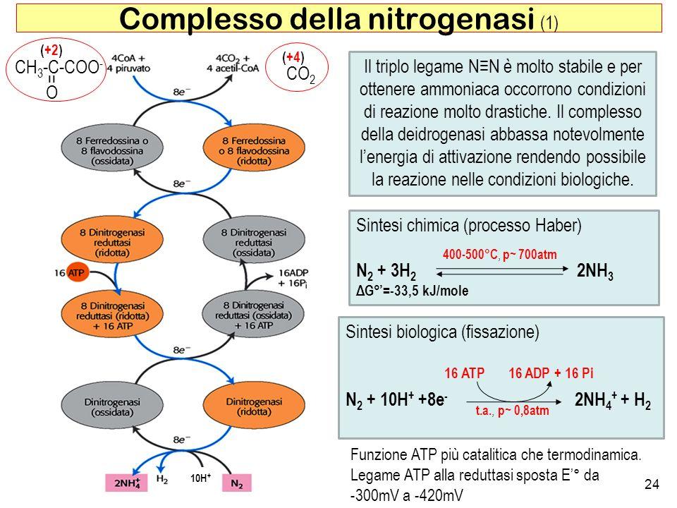 Complesso della nitrogenasi (1)
