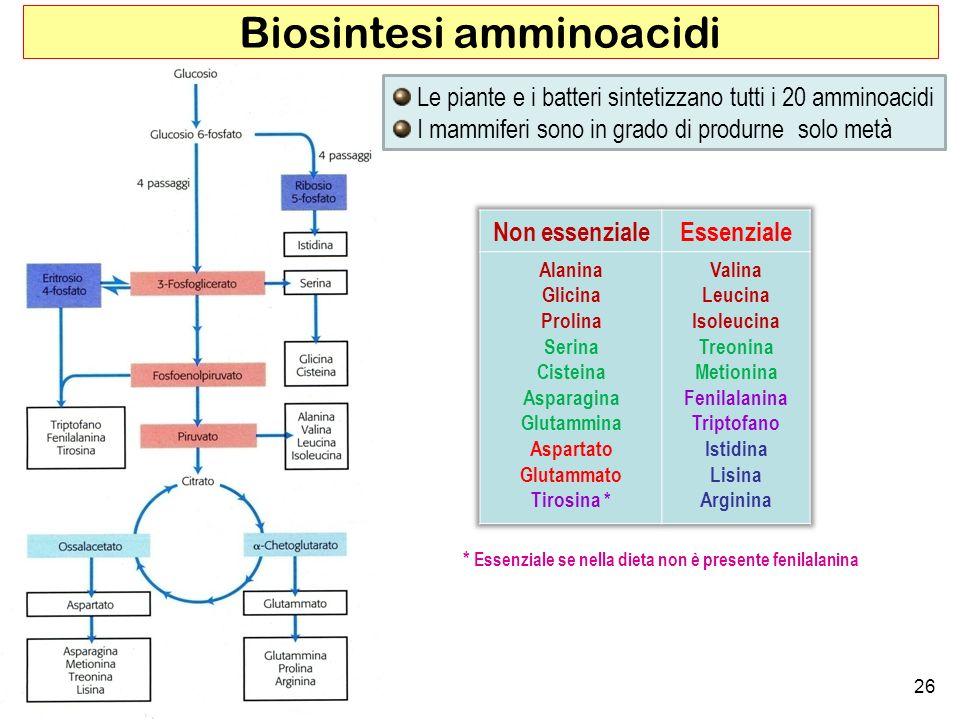 Biosintesi amminoacidi
