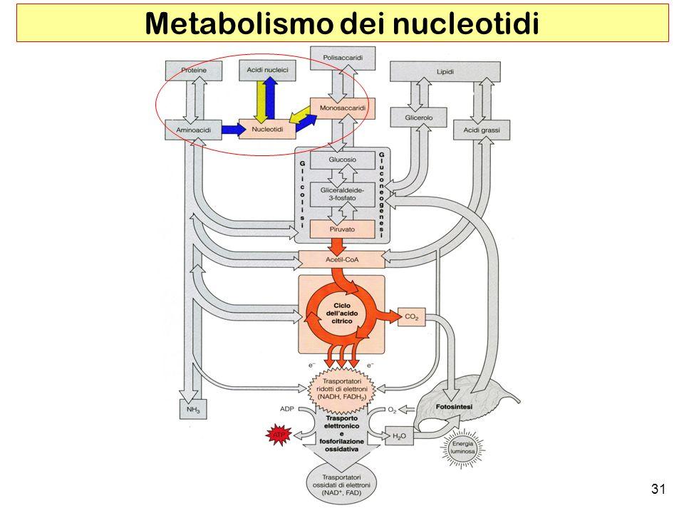 Metabolismo dei nucleotidi