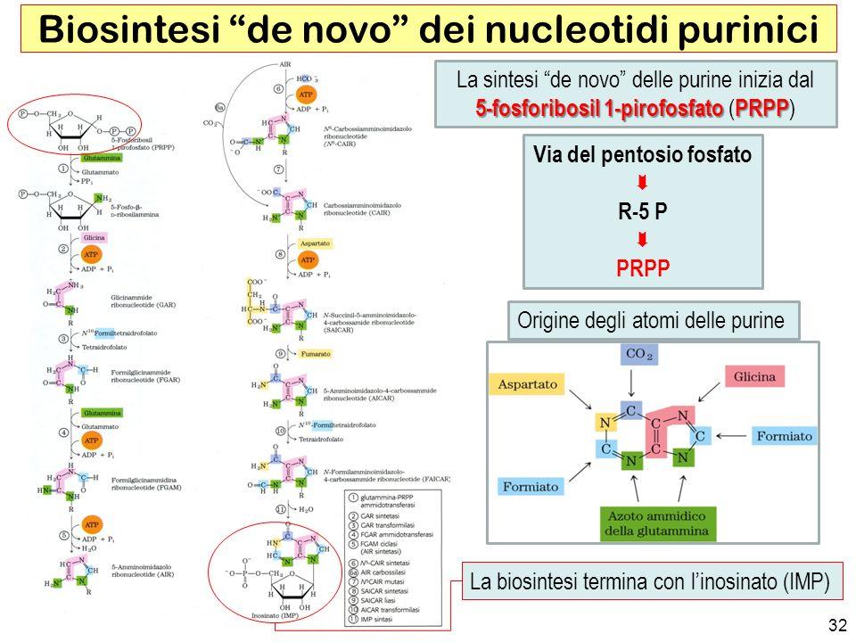 Biosintesi de novo dei nucleotidi purinici