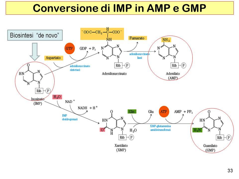 Conversione di IMP in AMP e GMP