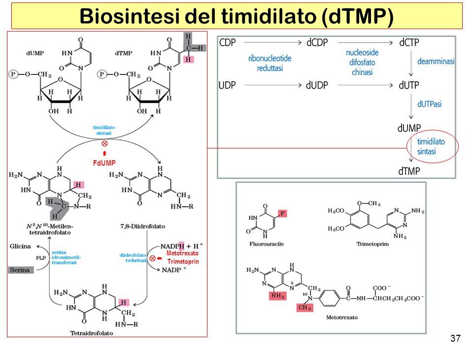 Biosintesi del timidilato (dTMP)