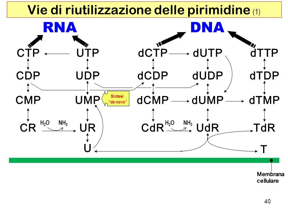 Vie di riutilizzazione delle pirimidine (1)