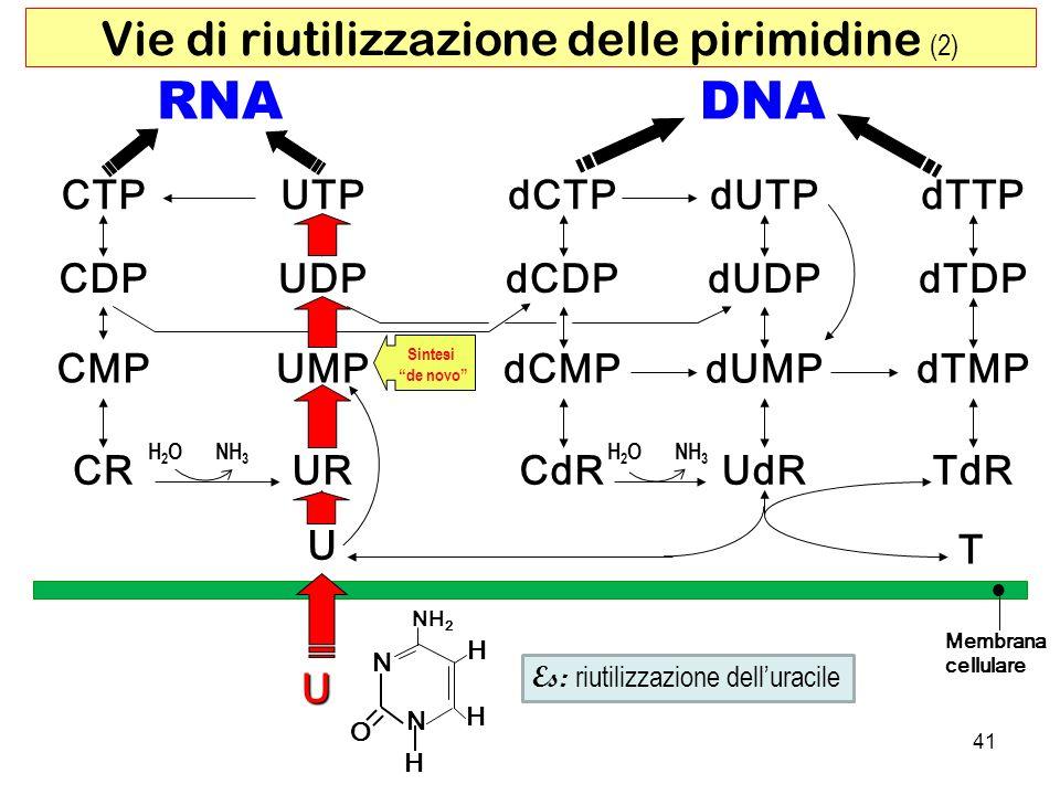 Vie di riutilizzazione delle pirimidine (2)
