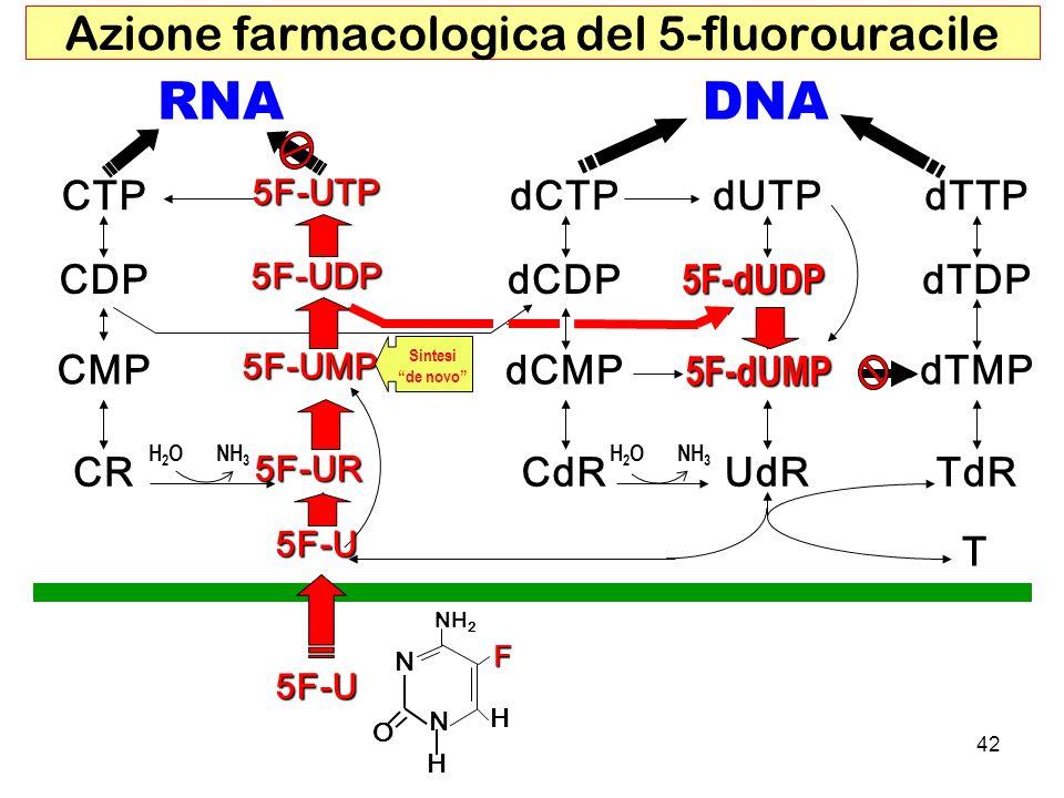 Azione farmacologica del 5-fluorouracile