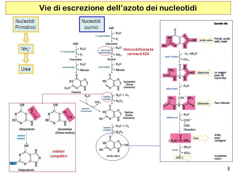 Vie di escrezione dell'azoto dei nucleotidi