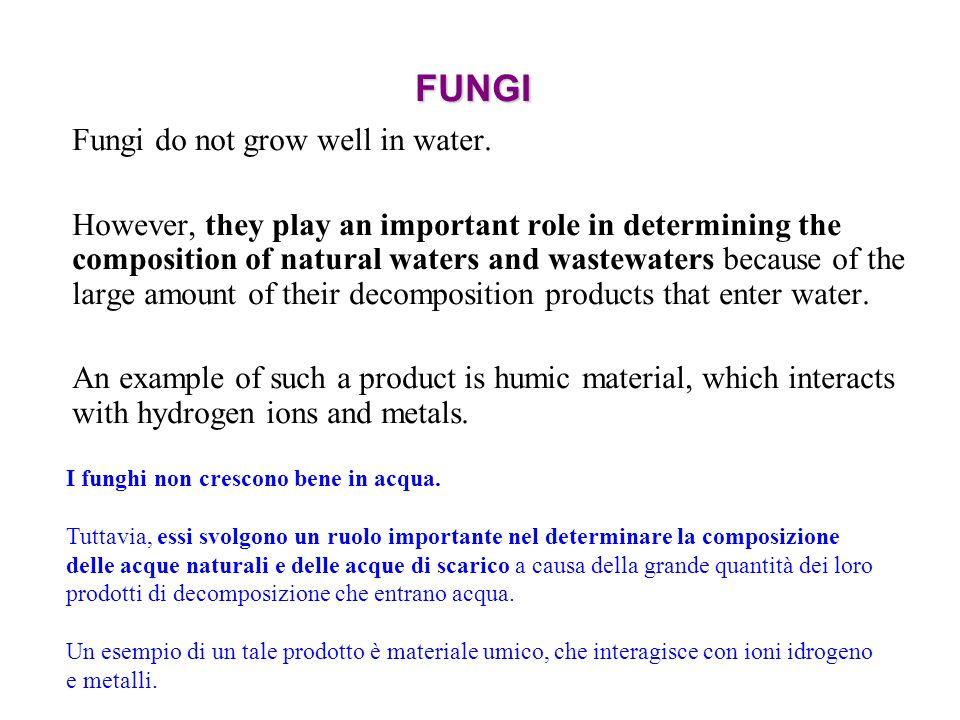 FUNGI Fungi do not grow well in water.