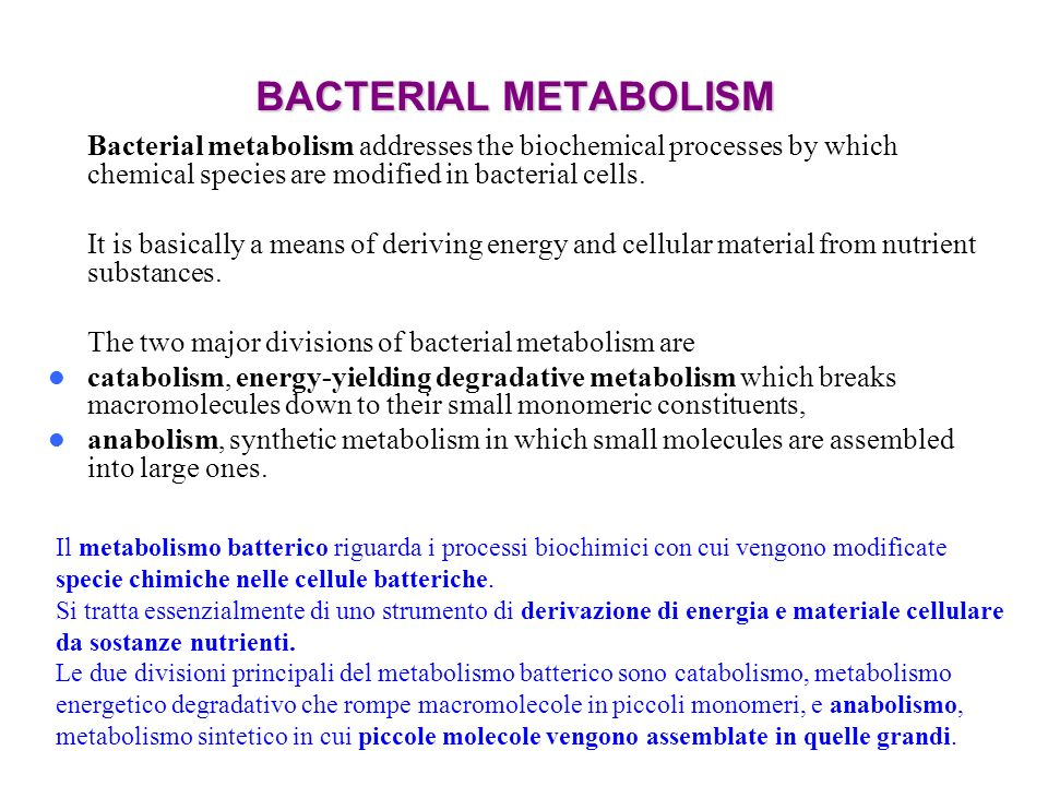 BACTERIAL METABOLISM Bacterial metabolism addresses the biochemical processes by which chemical species are modified in bacterial cells.