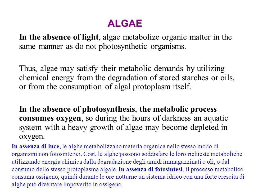 ALGAE In the absence of light, algae metabolize organic matter in the same manner as do not photosynthetic organisms.