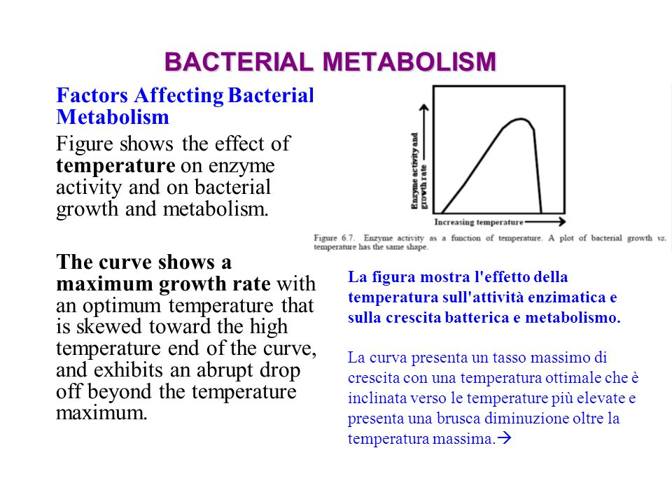 BACTERIAL METABOLISM Factors Affecting Bacterial Metabolism