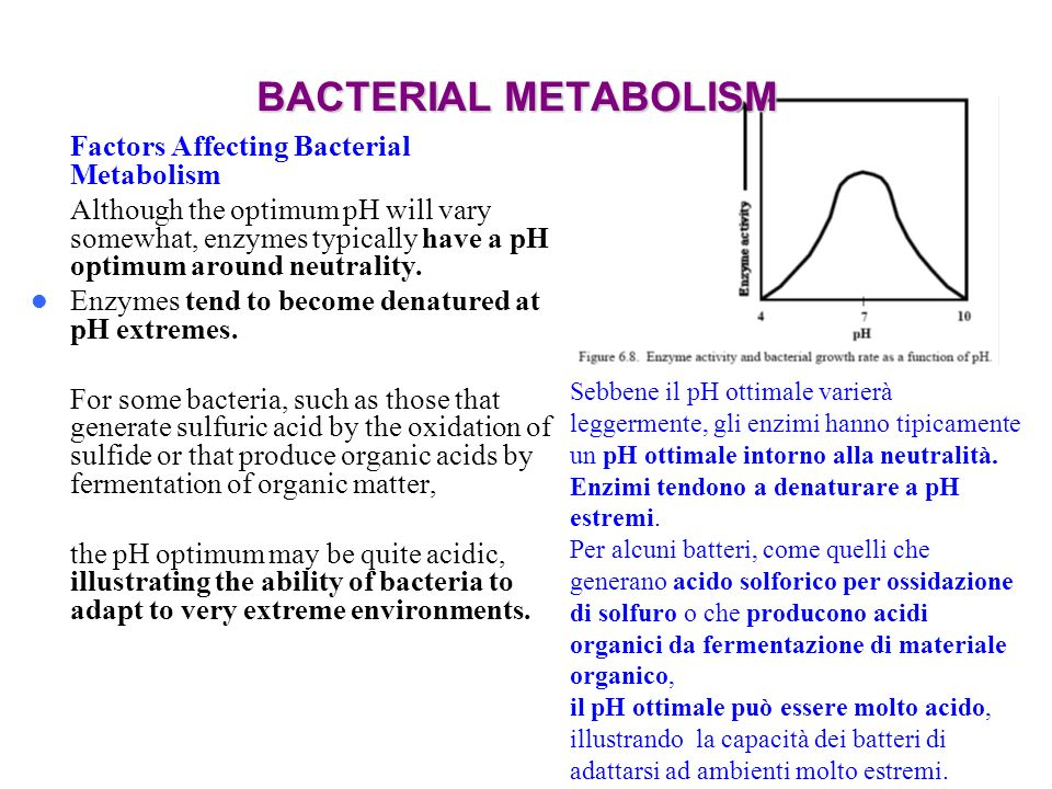 BACTERIAL METABOLISM Factors Affecting Bacterial Metabolism
