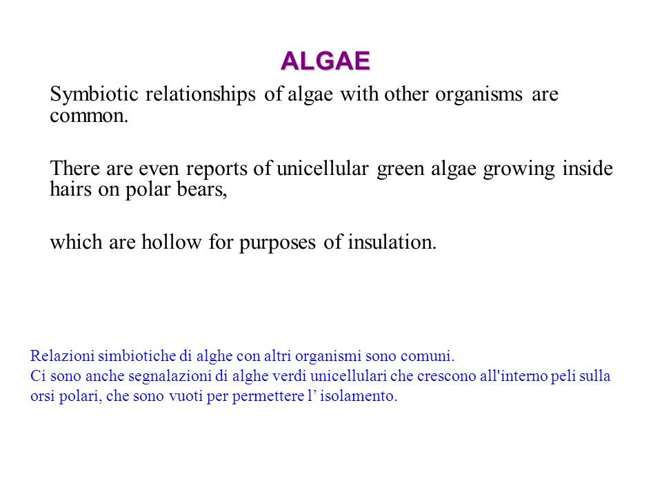 ALGAESymbiotic relationships of algae with other organisms are common.