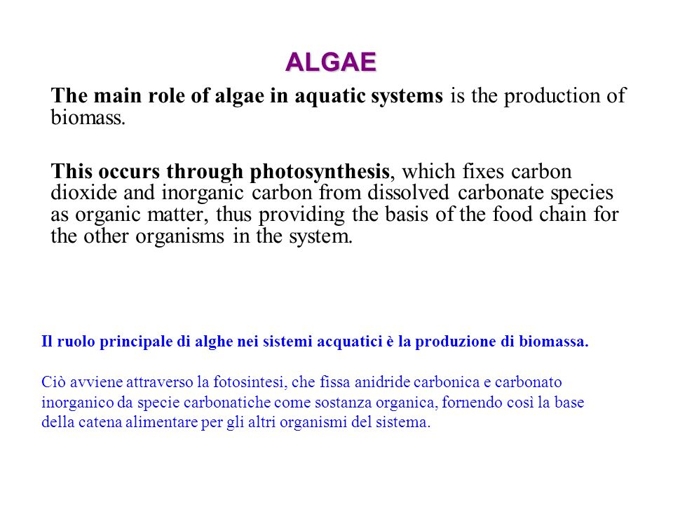 ALGAE The main role of algae in aquatic systems is the production of biomass.