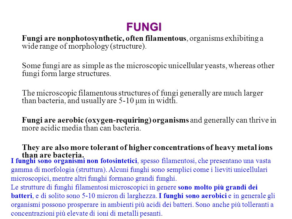 FUNGI Fungi are nonphotosynthetic, often filamentous, organisms exhibiting a wide range of morphology (structure).