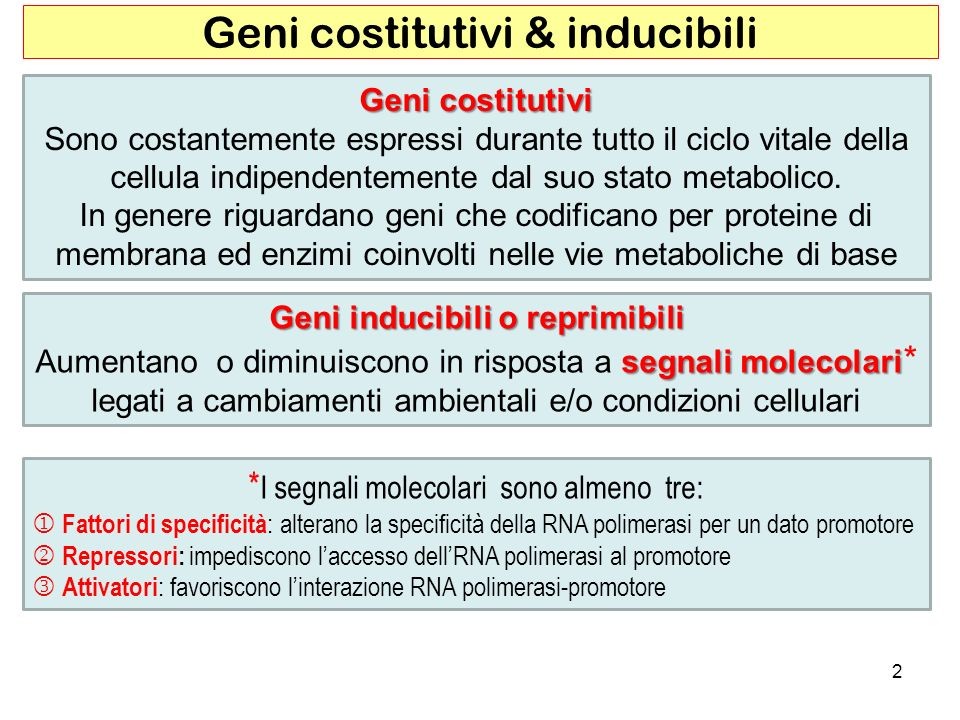 Geni costitutivi & inducibili