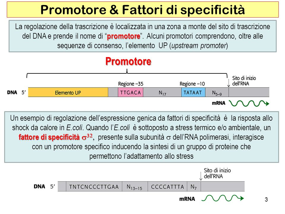 Promotore & Fattori di specificità