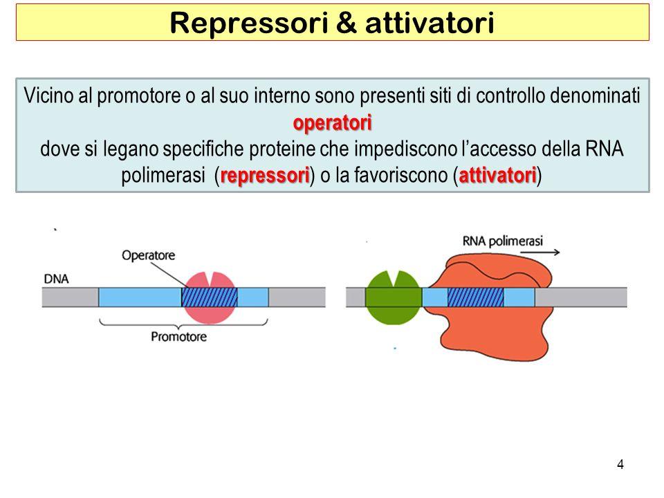 Repressori & attivatori