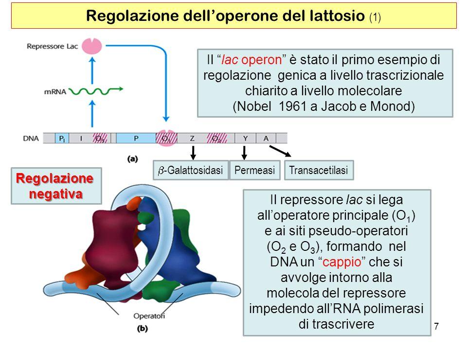 Regolazione dell'operone del lattosio (1)