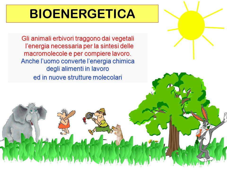 BIOENERGETICA Gli animali erbivori traggono dai vegetali