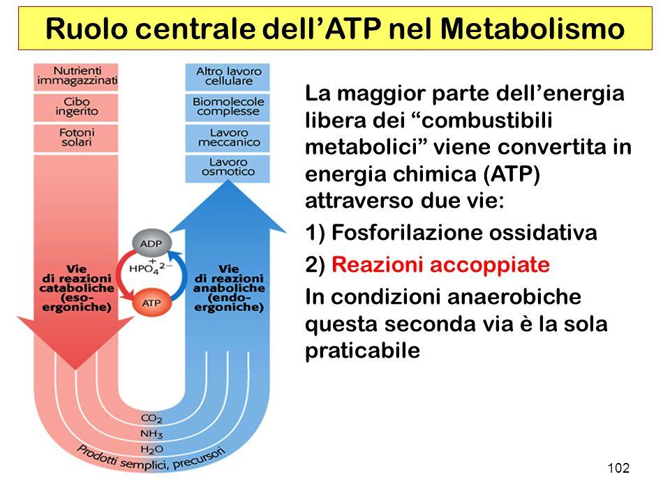 Ruolo centrale dell'ATP nel Metabolismo