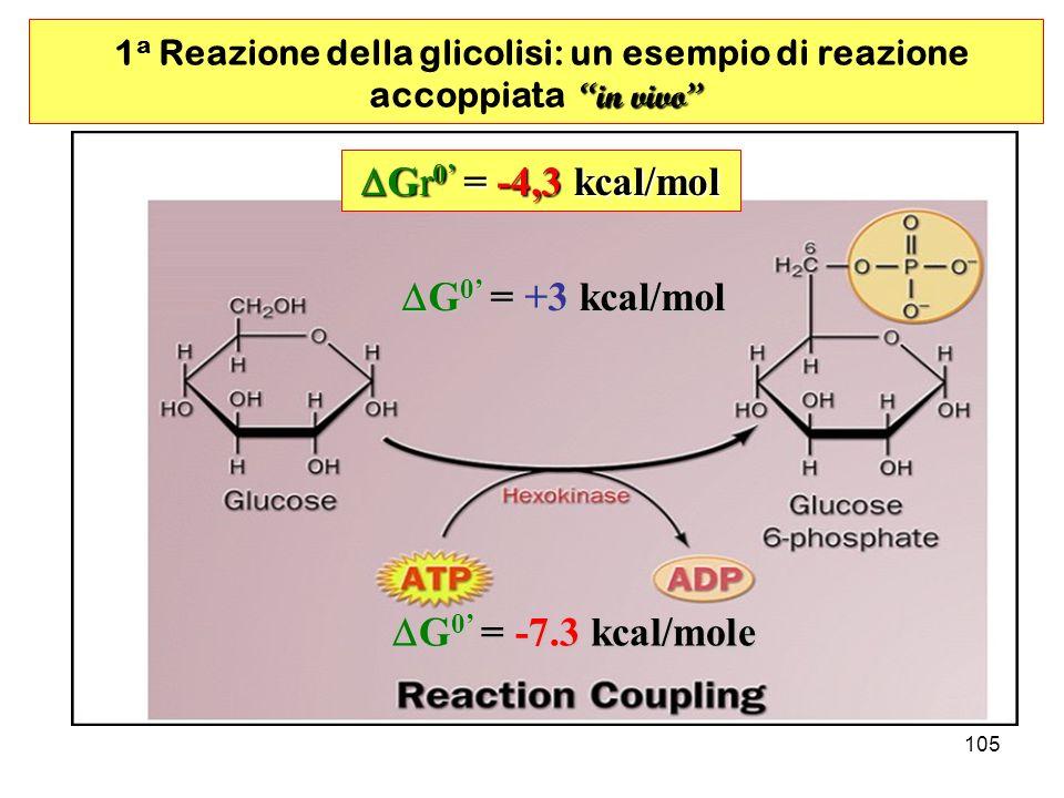 1a Reazione della glicolisi: un esempio di reazione accoppiata in vivo