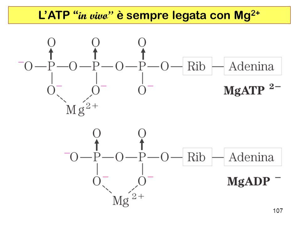 L'ATP in vivo è sempre legata con Mg2+